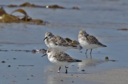 20180427-IN8A6446crsanderling.jpg