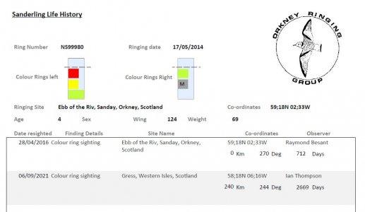 Sanderling, Orkney - Gress, Lewis 1.JPG