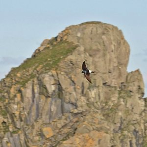 House Martin, St Kilda May 2021